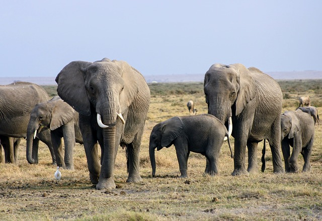elephants Amboseli National park
